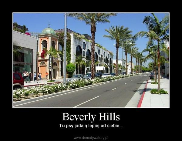 Beverly Hills – Tu psy jadają lepiej od ciebie...