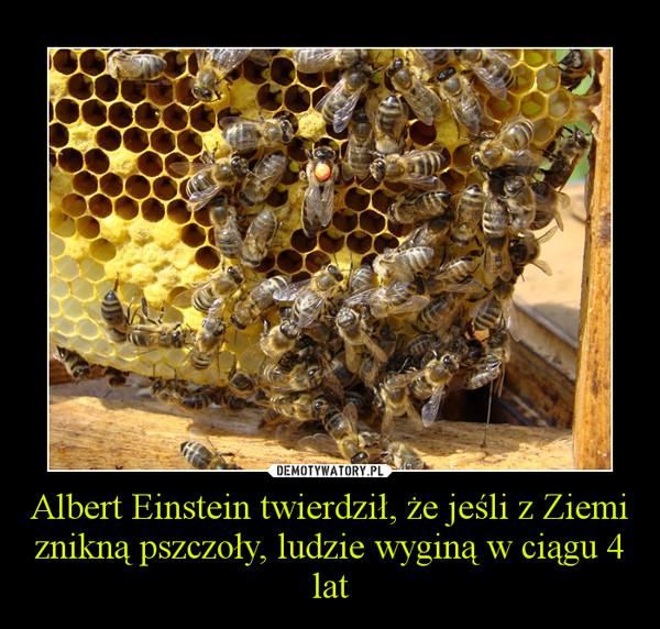 Albert Einstein twierdził, że jeśli z Ziemi znikną pszczoły, ludzie wyginą w ciągu 4 lat –