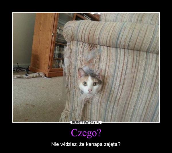 Czego? – Nie widzisz, że kanapa zajęta?