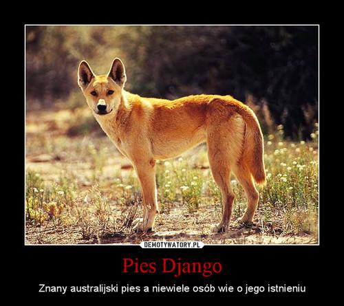 Pies Django
