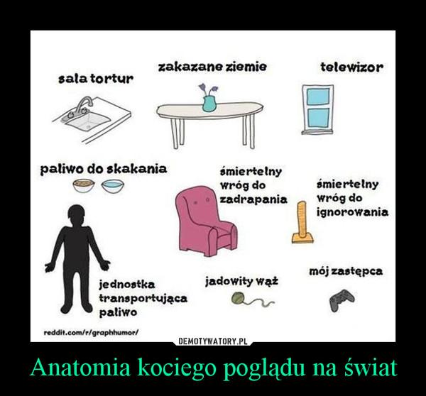 Anatomia kociego poglądu na świat –