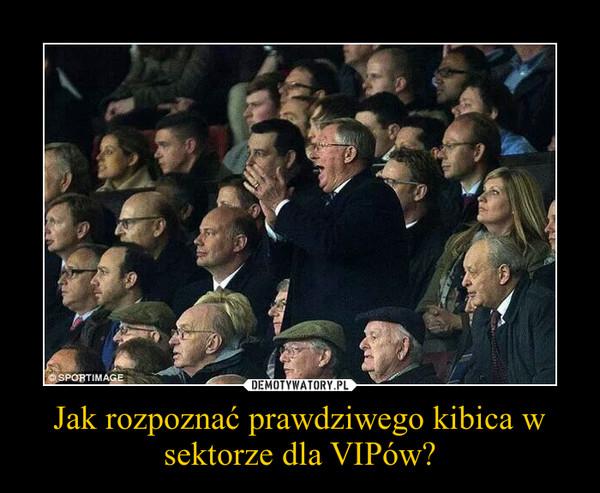Jak rozpoznać prawdziwego kibica w sektorze dla VIPów? –