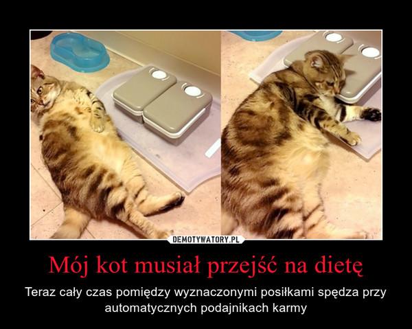 Mój kot musiał przejść na dietę – Teraz cały czas pomiędzy wyznaczonymi posiłkami spędza przy automatycznych podajnikach karmy