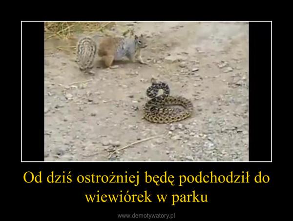 Od dziś ostrożniej będę podchodził do wiewiórek w parku –