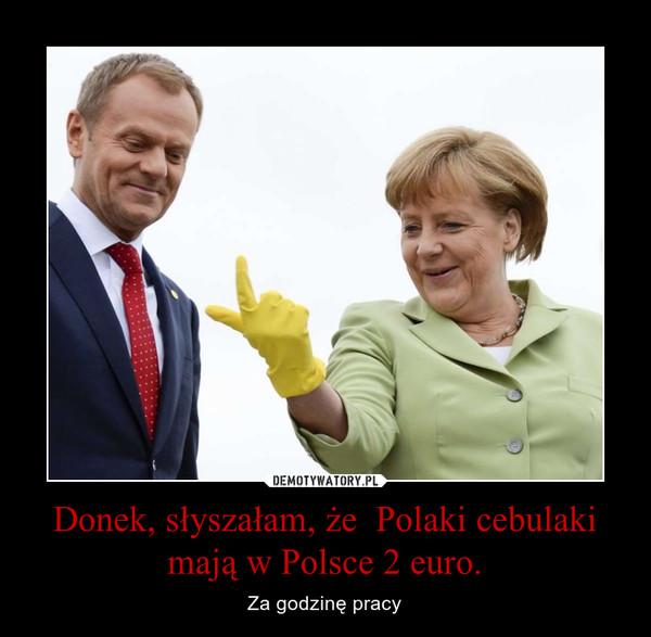 Donek, słyszałam, że  Polaki cebulaki mają w Polsce 2 euro. – Za godzinę pracy