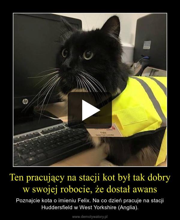 Ten pracujący na stacji kot był tak dobry w swojej robocie, że dostał awans – Poznajcie kota o imieniu Felix. Na co dzień pracuje na stacji Huddersfield w West Yorkshire (Anglia).