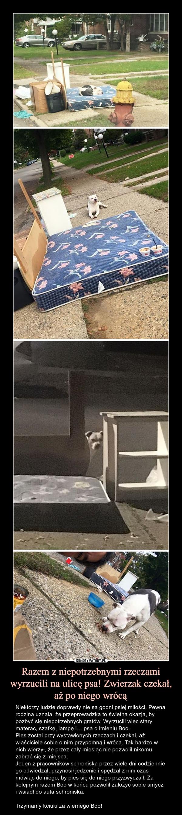 Razem z niepotrzebnymi rzeczami wyrzucili na ulicę psa! Zwierzak czekał, aż po niego wrócą – Niektórzy ludzie doprawdy nie są godni psiej miłości. Pewna rodzina uznała, że przeprowadzka to świetna okazja, by pozbyć się niepotrzebnych gratów. Wyrzucili więc stary materac, szafkę, lampę i… psa o imieniu Boo.Pies został przy wystawionych rzeczach i czekał, aż właściciele sobie o nim przypomną i wrócą. Tak bardzo w nich wierzył, że przez cały miesiąc nie pozwolił nikomu zabrać się z miejsca.Jeden z pracowników schroniska przez wiele dni codziennie go odwiedzał, przynosił jedzenie i spędzał z nim czas mówiąc do niego, by pies się do niego przyzwyczaił. Za kolejnym razem Boo w końcu pozwolił założyć sobie smycz i wsiadł do auta schroniska.Trzymamy kciuki za wiernego Boo!
