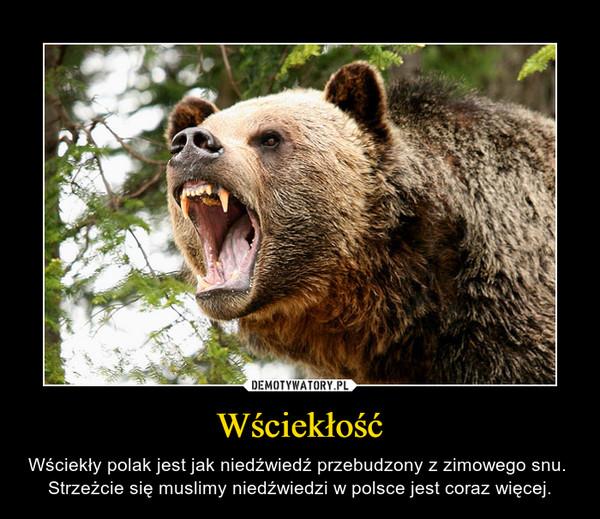 Wściekłość – Wściekły polak jest jak niedźwiedź przebudzony z zimowego snu. Strzeżcie się muslimy niedźwiedzi w polsce jest coraz więcej.