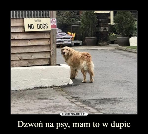 Dzwoń na psy, mam to w dupie –  SORRYNO DOGS