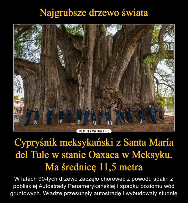 Cypryśnik meksykański z Santa María del Tule w stanie Oaxaca w Meksyku. Ma średnicę 11,5 metra – W latach 90-tych drzewo zaczęło chorować z powodu spalin z pobliskiej Autostrady Panamerykańskiej i spadku poziomu wód gruntowych. Władze przesunęły autostradę i wybudowały studnię