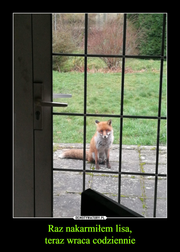 Raz nakarmiłem lisa,teraz wraca codziennie –