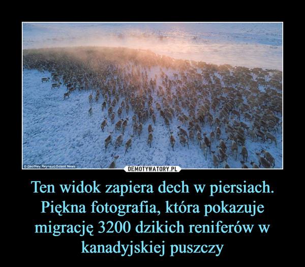 Ten widok zapiera dech w piersiach. Piękna fotografia, która pokazuje migrację 3200 dzikich reniferów w kanadyjskiej puszczy –