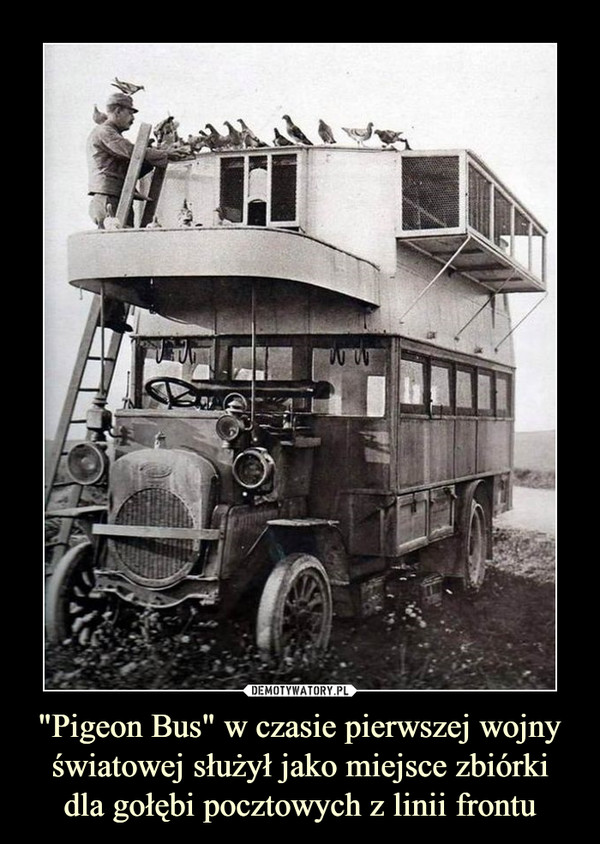 """""""Pigeon Bus"""" w czasie pierwszej wojny światowej służył jako miejsce zbiórki dla gołębi pocztowych z linii frontu –"""