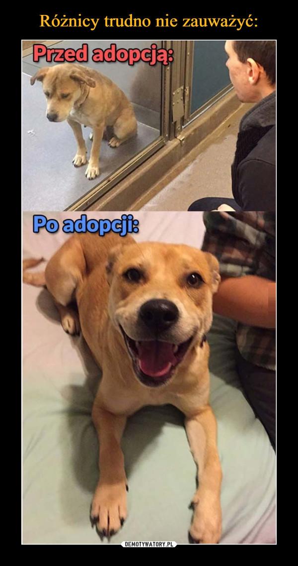–  Przed adopcją:Po adopcji: