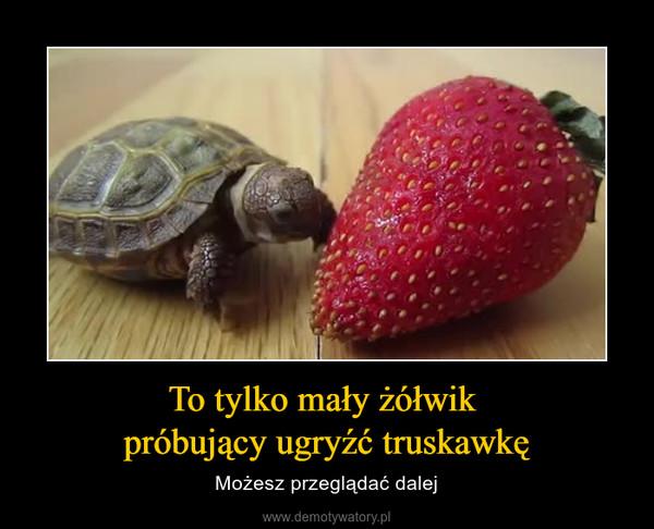 To tylko mały żółwik próbujący ugryźć truskawkę – Możesz przeglądać dalej