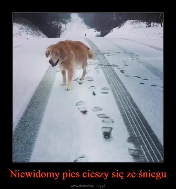 Niewidomy pies cieszy się ze śniegu –