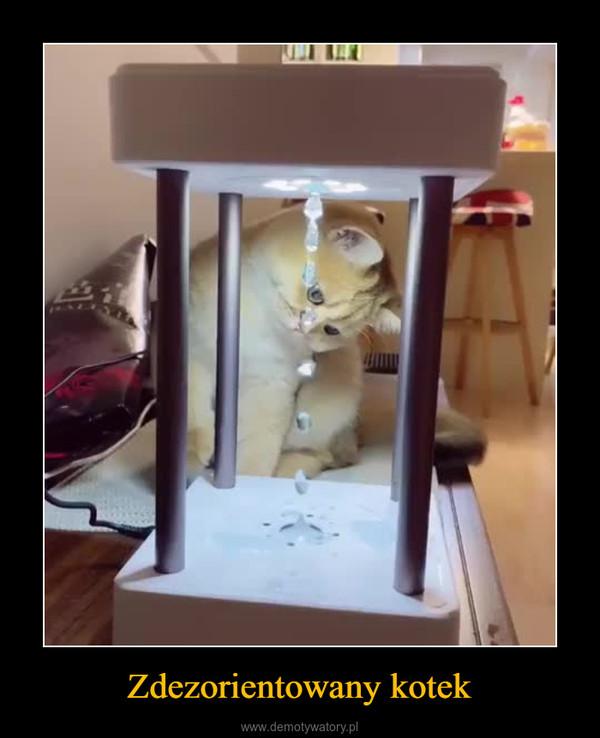 Zdezorientowany kotek –
