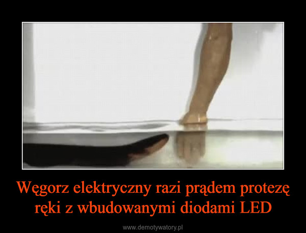 Węgorz elektryczny razi prądem protezę ręki z wbudowanymi diodami LED –