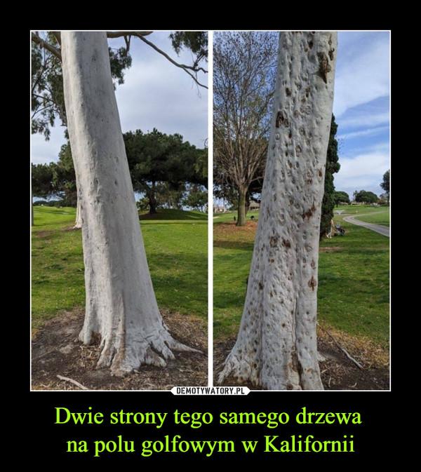 Dwie strony tego samego drzewa na polu golfowym w Kalifornii –