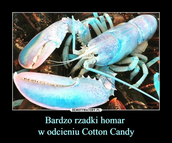 Bardzo rzadki homar w odcieniu Cotton Candy –