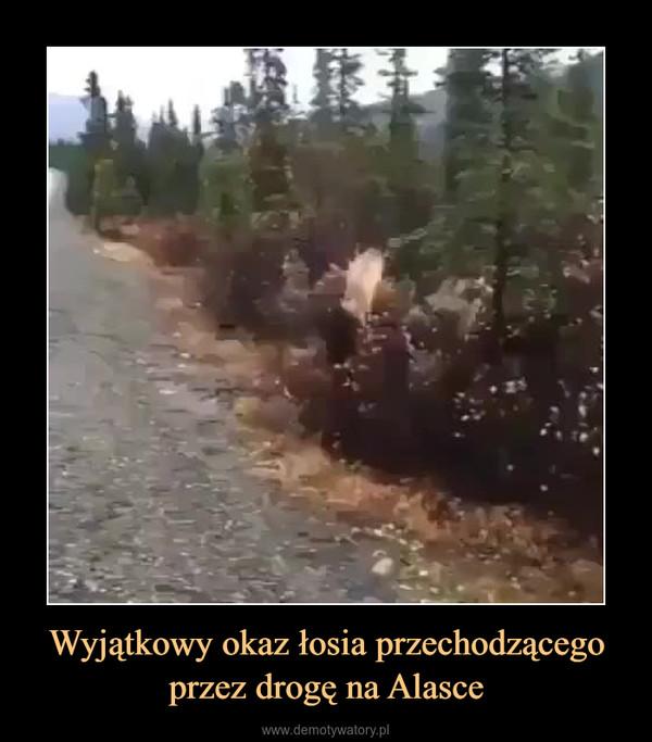 Wyjątkowy okaz łosia przechodzącego przez drogę na Alasce –