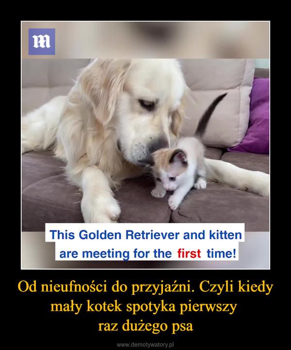Od nieufności do przyjaźni. Czyli kiedy mały kotek spotyka pierwszy raz dużego psa –