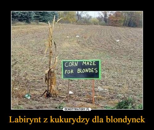 Labirynt z kukurydzy dla blondynek