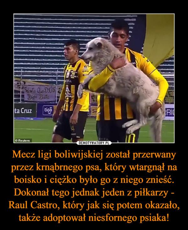 Mecz ligi boliwijskiej został przerwany przez krnąbrnego psa, który wtargnął na boisko i ciężko było go z niego znieść. Dokonał tego jednak jeden z piłkarzy - Raul Castro, który jak się potem okazało, także adoptował niesfornego psiaka! –