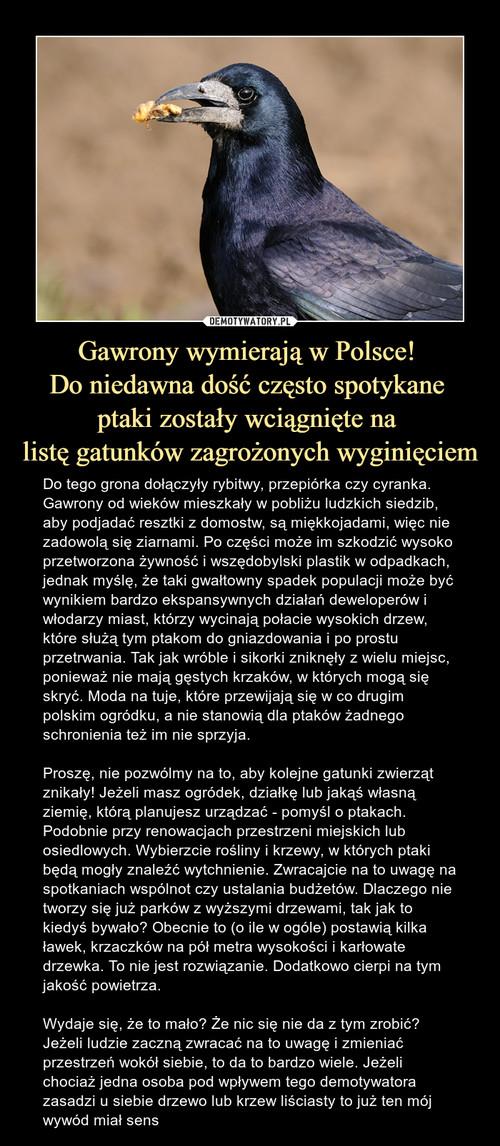 Gawrony wymierają w Polsce!  Do niedawna dość często spotykane  ptaki zostały wciągnięte na  listę gatunków zagrożonych wyginięciem
