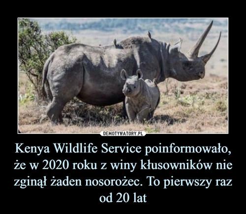 Kenya Wildlife Service poinformowało, że w 2020 roku z winy kłusowników nie zginął żaden nosorożec. To pierwszy raz od 20 lat