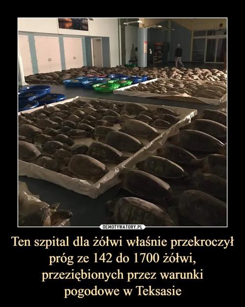 Ten szpital dla żółwi właśnie przekroczył próg ze 142 do 1700 żółwi, przeziębionych przez warunki pogodowe w Teksasie