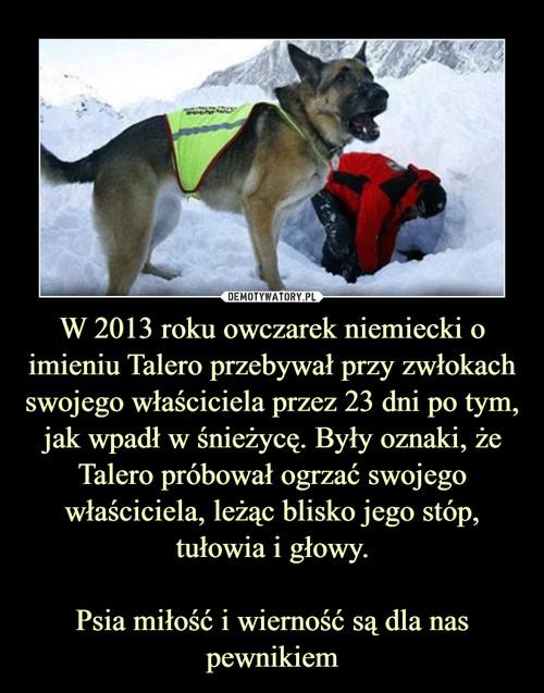 W 2013 roku owczarek niemiecki o imieniu Talero przebywał przy zwłokach swojego właściciela przez 23 dni po tym, jak wpadł w śnieżycę. Były oznaki, że Talero próbował ogrzać swojego właściciela, leżąc blisko jego stóp, tułowia i głowy.  Psia miłość i wierność są dla nas pewnikiem