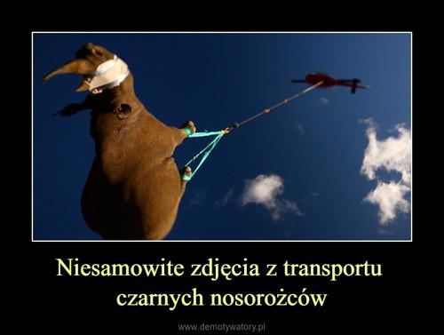 Niesamowite zdjęcia z transportu  czarnych nosorożców