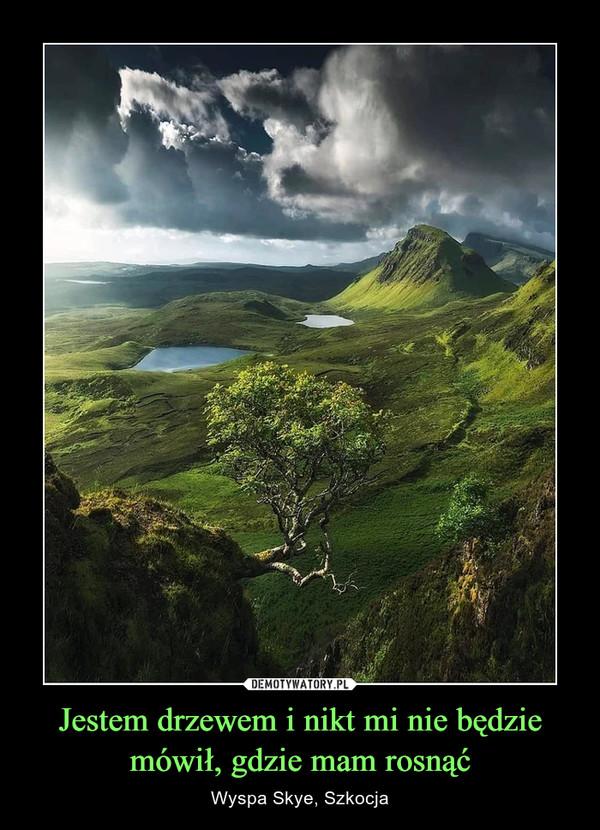 Jestem drzewem i nikt mi nie będzie mówił, gdzie mam rosnąć – Wyspa Skye, Szkocja
