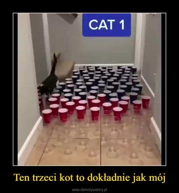 Ten trzeci kot to dokładnie jak mój –