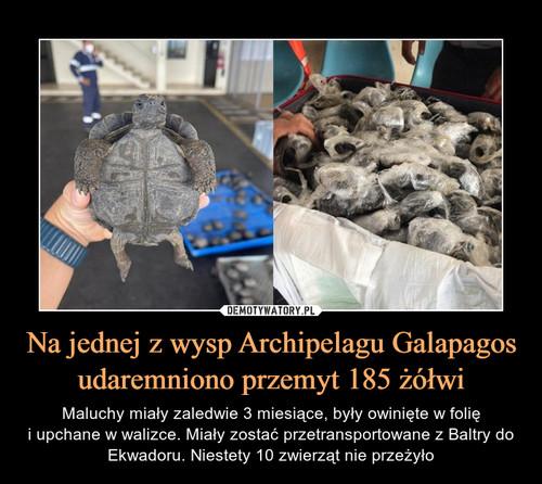 Na jednej z wysp Archipelagu Galapagos udaremniono przemyt 185 żółwi