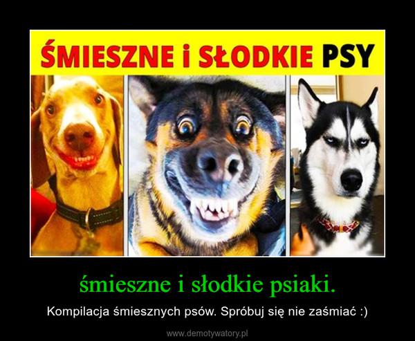 śmieszne i słodkie psiaki. – Kompilacja śmiesznych psów. Spróbuj się nie zaśmiać :)