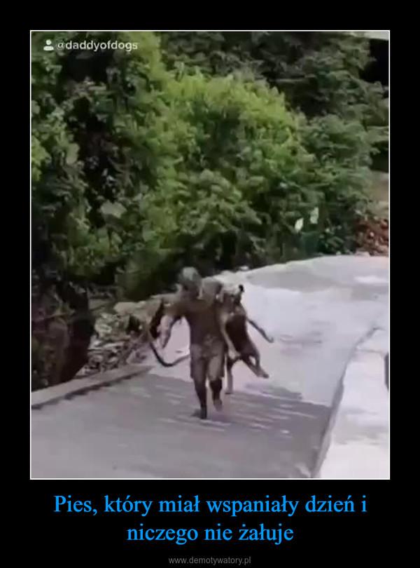 Pies, który miał wspaniały dzień i niczego nie żałuje –
