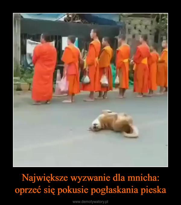 Największe wyzwanie dla mnicha: oprzeć się pokusie pogłaskania pieska –