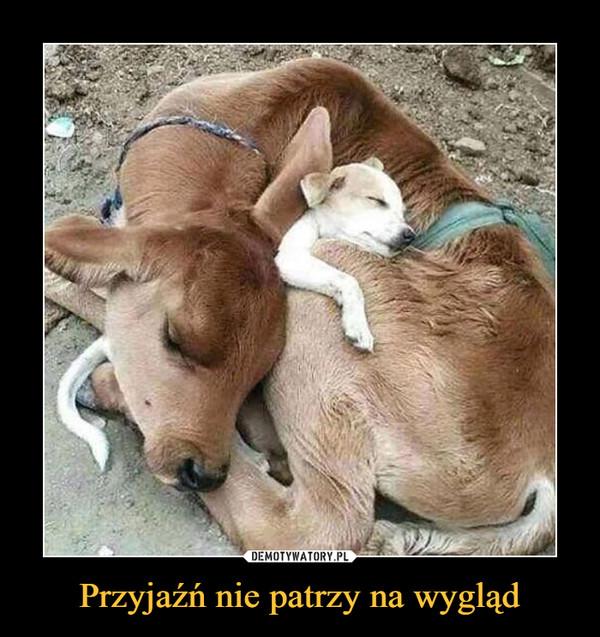 Przyjaźń nie patrzy na wygląd –