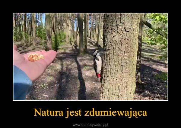 Natura jest zdumiewająca –