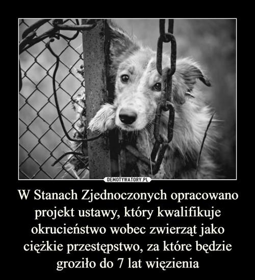W Stanach Zjednoczonych opracowano projekt ustawy, który kwalifikuje okrucieństwo wobec zwierząt jako ciężkie przestępstwo, za które będzie groziło do 7 lat więzienia