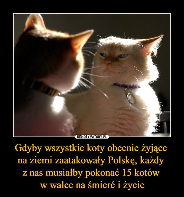 Gdyby wszystkie koty obecnie żyjące na ziemi zaatakowały Polskę, każdy z nas musiałby pokonać 15 kotów w walce na śmierć i życie –
