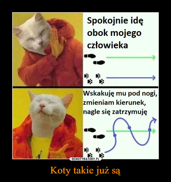 Koty takie już są –