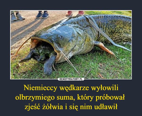 Niemieccy wędkarze wyłowili olbrzymiego suma, który próbował zjeść żółwia i się nim udławił –
