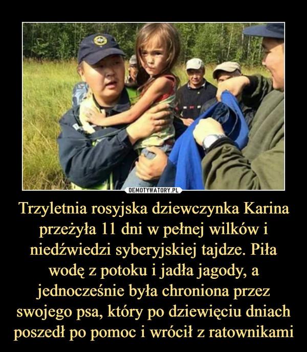 Trzyletnia rosyjska dziewczynka Karina przeżyła 11 dni w pełnej wilków i niedźwiedzi syberyjskiej tajdze. Piła wodę z potoku i jadła jagody, a jednocześnie była chroniona przez swojego psa, który po dziewięciu dniach poszedł po pomoc i wrócił z ratownikami –
