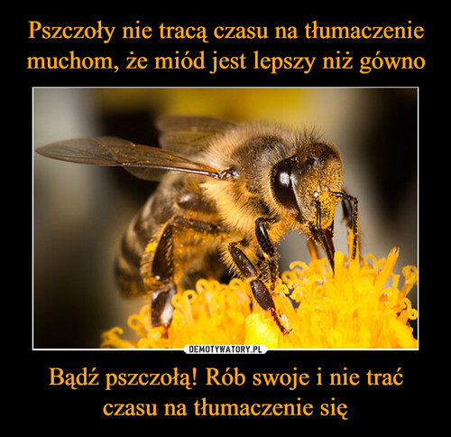 Pszczoły nie tracą czasu na tłumaczenie muchom, że miód jest lepszy niż gówno Bądź pszczołą! Rób swoje i nie trać czasu na tłumaczenie się