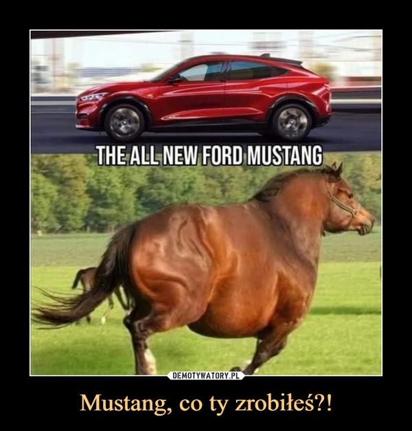 Mustang, co ty zrobiłeś?! –