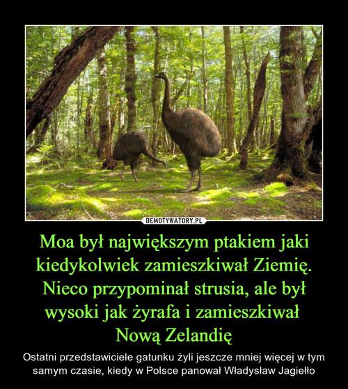 Moa był największym ptakiem jaki kiedykolwiek zamieszkiwał Ziemię. Nieco przypominał strusia, ale był wysoki jak żyrafa i zamieszkiwał  Nową Zelandię