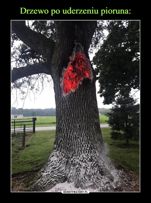 Drzewo po uderzeniu pioruna: